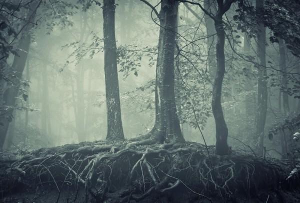 Fototapete Nr. 3754 - Mystic forest I