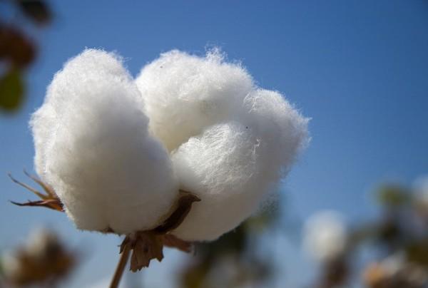 Fototapete Nr. 3863 - Cotton