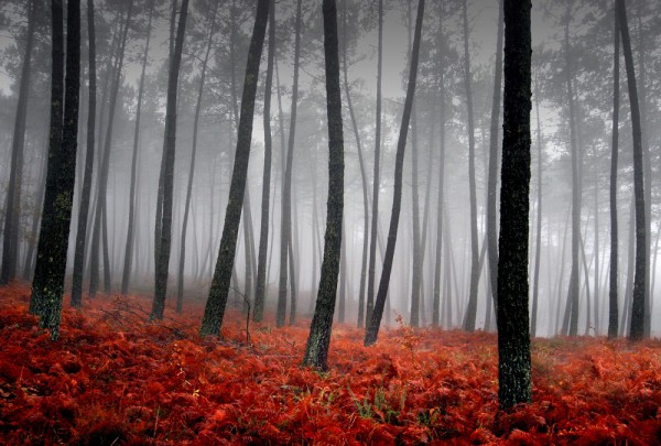 Fototapete Nr. 3757 - Autumn forest