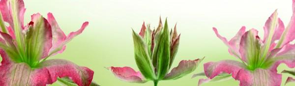 Panoramatapete Nr. 3305 - Wilde Orchideen