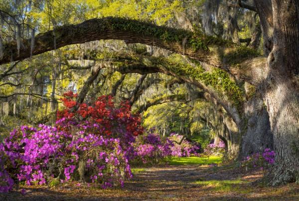 Fototapete Nr. 3624 - Charleston park