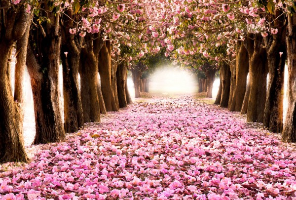 Fototapete Nr. 3365 - Pink tunnel