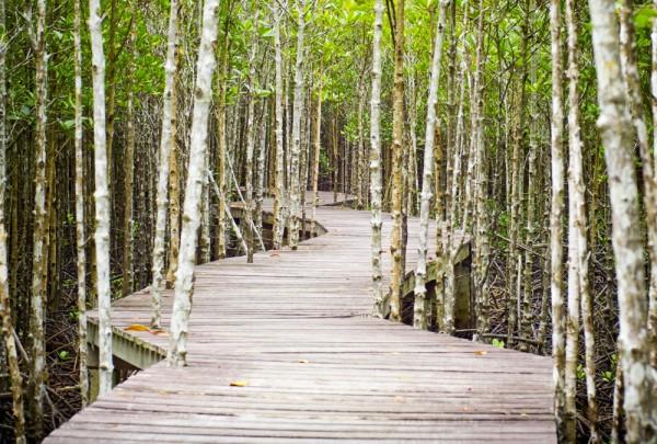 Fototapete Nr. 3167 - Holzweg im Mangrovenwald