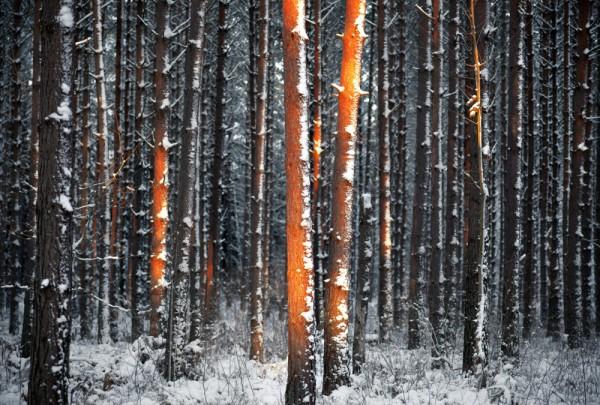 Fototapete Nr. 3755 - Winter sunlight