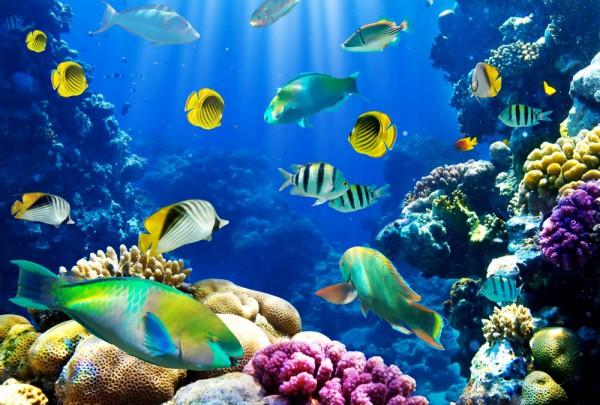Fototapete Nr. 3641 - Coral reef
