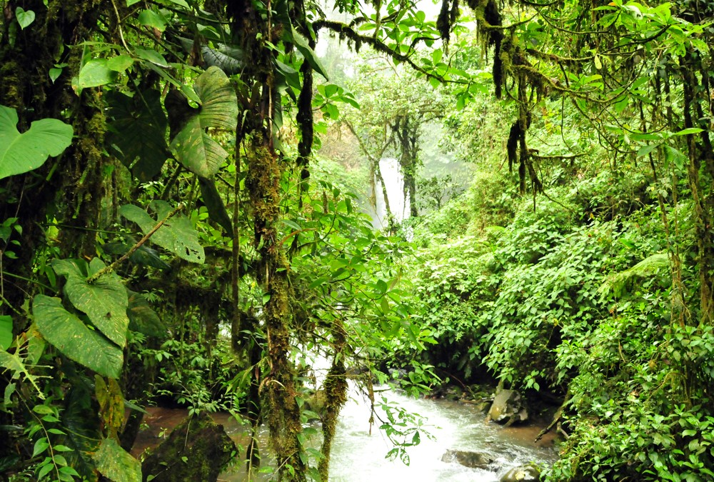Fototapete tropischer regenwald  Fototapete Nr. 3192 - Tropischer Regenwald, Kolumbien | Wälder ...