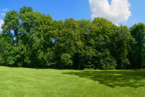 Fototapete Nr. 3569b - Green Park