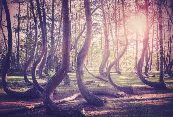 Fototapete Nr. 2935 - Wald der Erinnerung