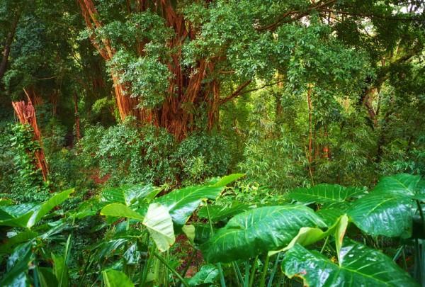 Fototapete Nr. 3194 - Tropischer Regenwald, Neuseeland