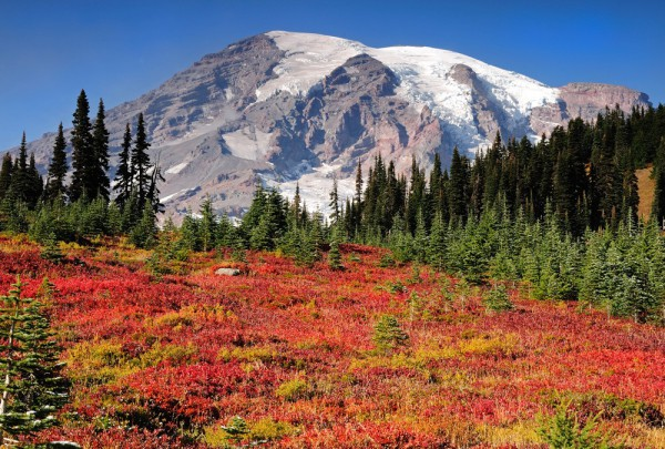Fototapete Nr. 3541 - Mt. Rainier autumn
