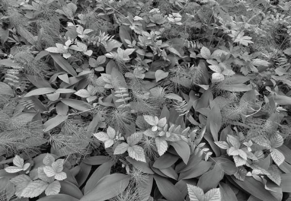 Fototapete Nr. 9495 - Forest Floor