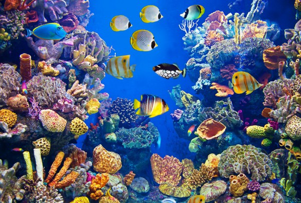 Fototapete Nr. 3407 - Aquarium