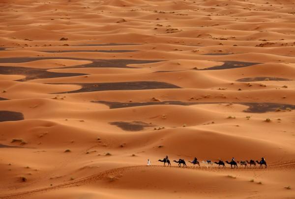 Fototapete Nr. 3401 - Camel caravan