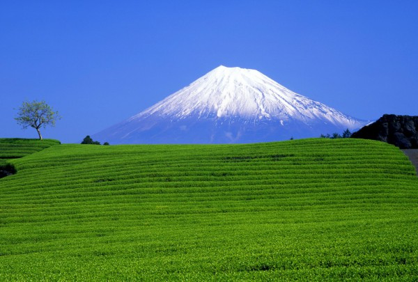Fototapete Nr. 3537 - Fuji green fields