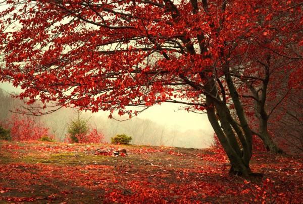 Fototapete Nr. 3598 - Herbstlaub