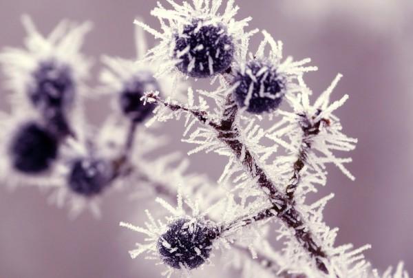 Fototapete Nr. 3877 - Blueberries
