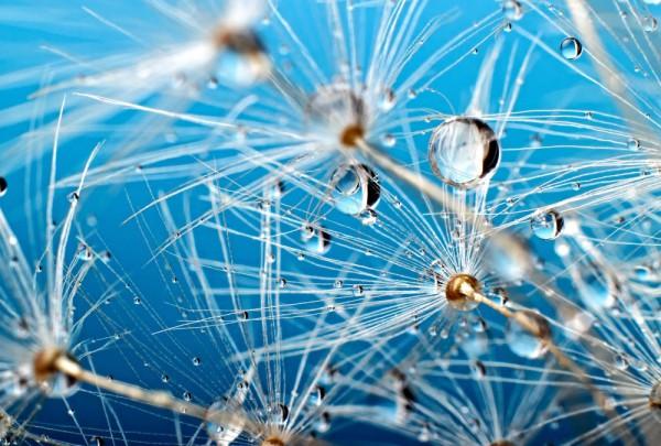 Fototapete Nr. 3359 - Water seeds