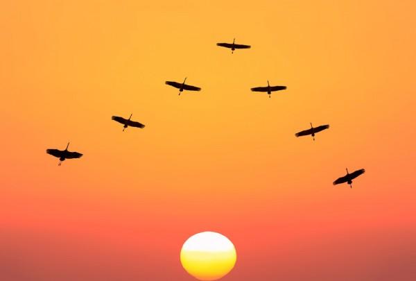 Fototapete Nr. 3683 - Crane sunset