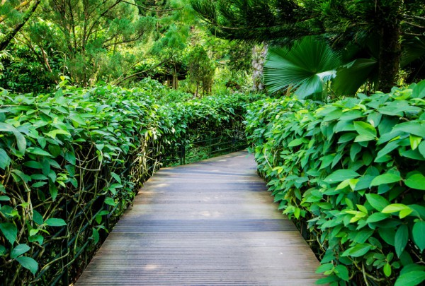 Fototapete Nr. 3169 - Holzweg im Botanischen Garten
