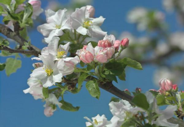 Fototapete Nr. 9540 - Spring Time