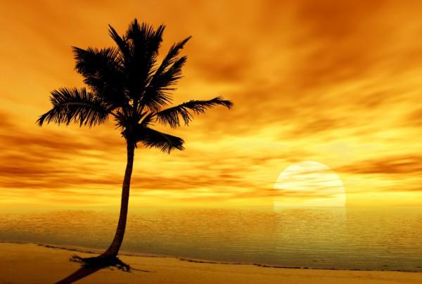 Fototapete Nr. 3891 - Palm Sunset