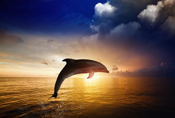 Fototapete Nr. 2999 - Delfinsprung
