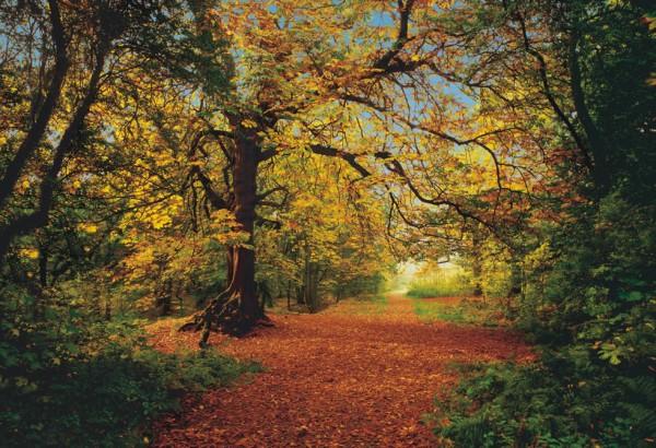 Fototapete Nr. 8520 - Herbstwald