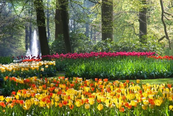Fototapete Nr. 3622 - Tulip garden