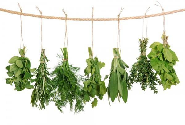 Fototapete Nr. 3610 - Fresh herbs