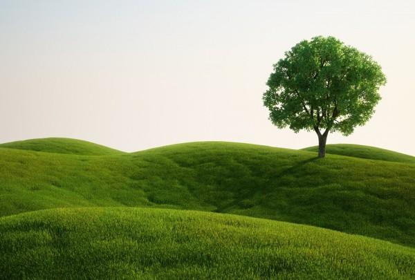 Fototapete Nr. 4540 - Green Tree