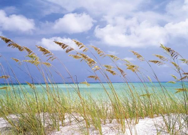 Fototapete Nr. 8640 - Ocean Breeze