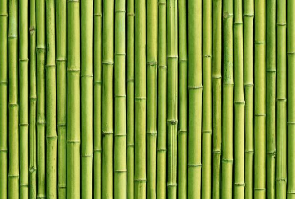 Fototapete Nr. 3402 - Bambus