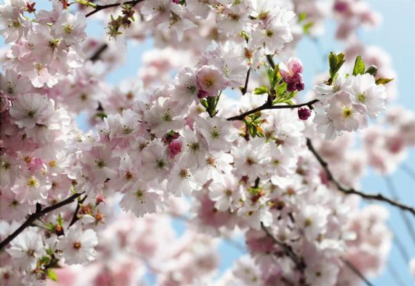 Fototapete Nr. 3248 - Spring