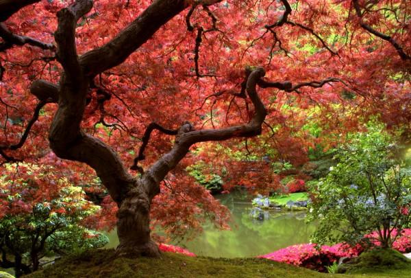 Fototapete Nr. 3364 - Japanese park