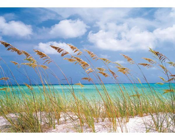 Fototapete Nr. 4412 - Ocean Breeze