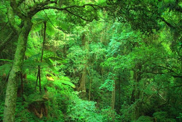 Fototapete Nr. 3196 - Tropischer Regenwald, Queensland, Australien