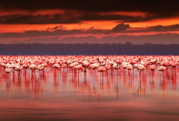 Fototapete Nr. 3859 - Flamingos
