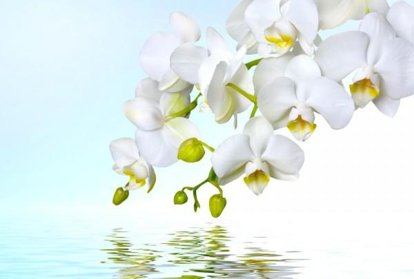 Fototapete Nr. 3304 - Orchidee & Reflex