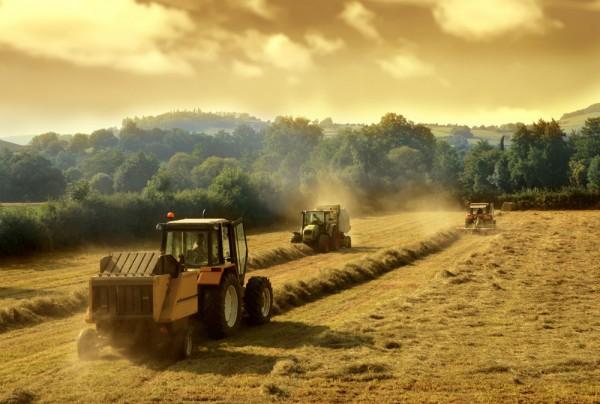 Fototapete Nr. 3519 - Harvesting