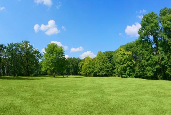 Fototapete Nr. 3569a - Green Park