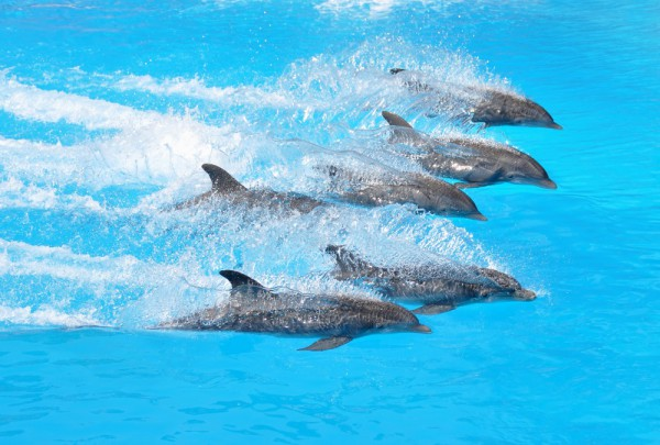 Fototapete Nr. 3642 - Happy dolphins