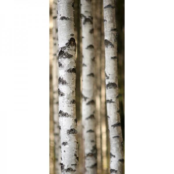 Türtapete Nr. 2950 - Birkenholz
