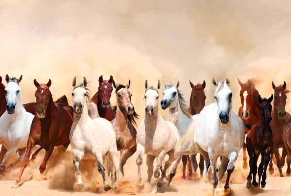 Fototapete Nr. 3336 - Eine Herde wilder Pferde