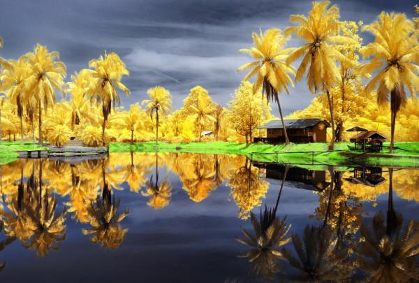 Fototapete Nr. 3139 - Palmen infrarot