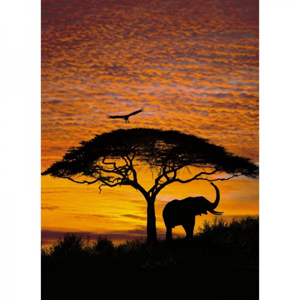 Fototapete Nr. 4426 - African Sunset