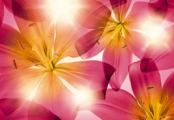 Fototapete Nr. 9480 - Sun blossoms