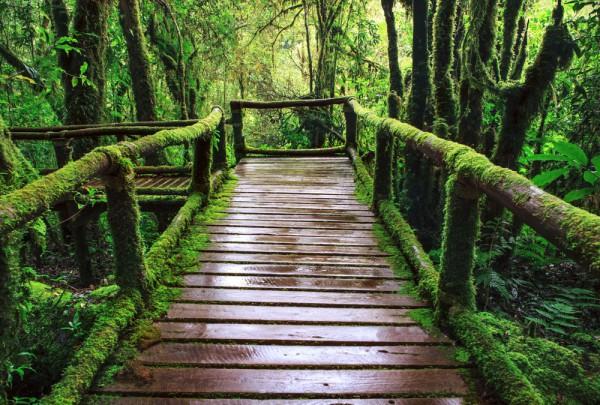 Fototapete Nr. 3168 - Holzweg im Regenwald