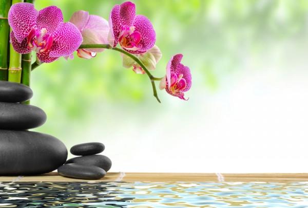 Fototapete Nr. 3950 - Zen & Orchidee