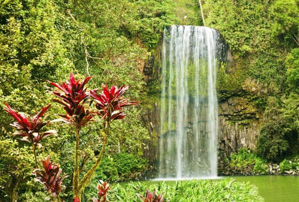Fototapete Nr. 3207 - Millaa Millaa falls, Australien