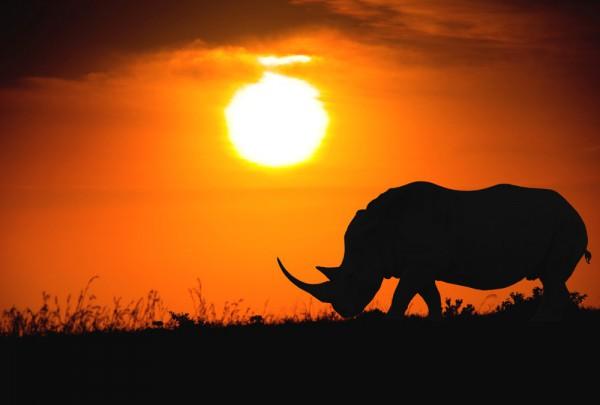Fototapete Nr. 3380 - African Rhino